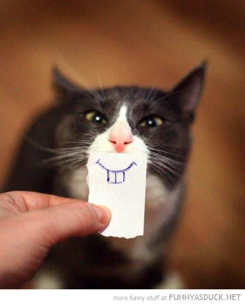 20 Smiling Cats That Will Melt Your Socks Off….Too ...   Funny Smiling Cat