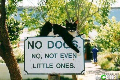 amusing-animal-photos-35