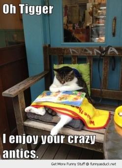 funny-cat-reading-tigger-book-pics