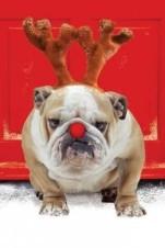 funny-christmas-animals-5-0-s-307x512