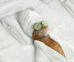 Funny-Cat-at-Beautiparlour