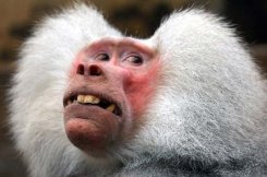 Very-Funny-Animal-Faces-28