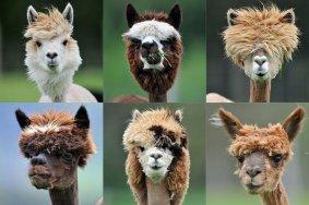 funny-haircuts