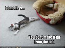funny-pictures-cat-falls-asleep-by-bed