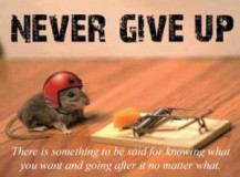 never-give-up-little-guy-300x222