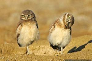 funny-birds-3