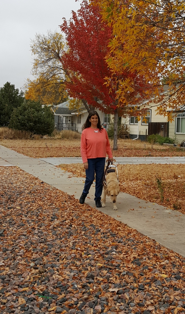 Pinto with guide on autumn street.jpg